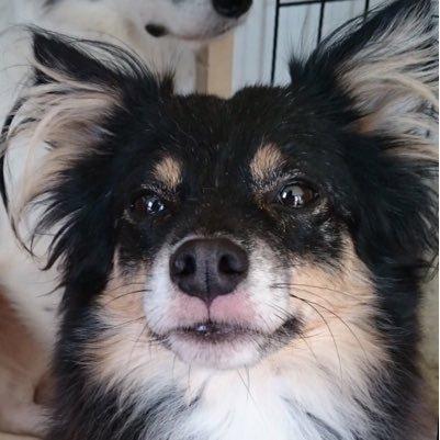 リーラ@迷い犬探しています