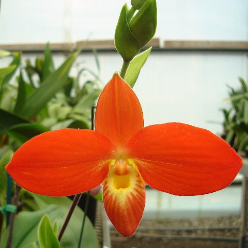 Brookside Orchids