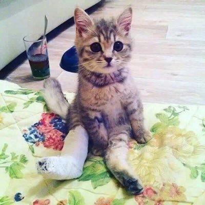 Kucing Sakit Kucingkalbu Twitter