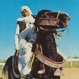 Libyan Armchair Arab