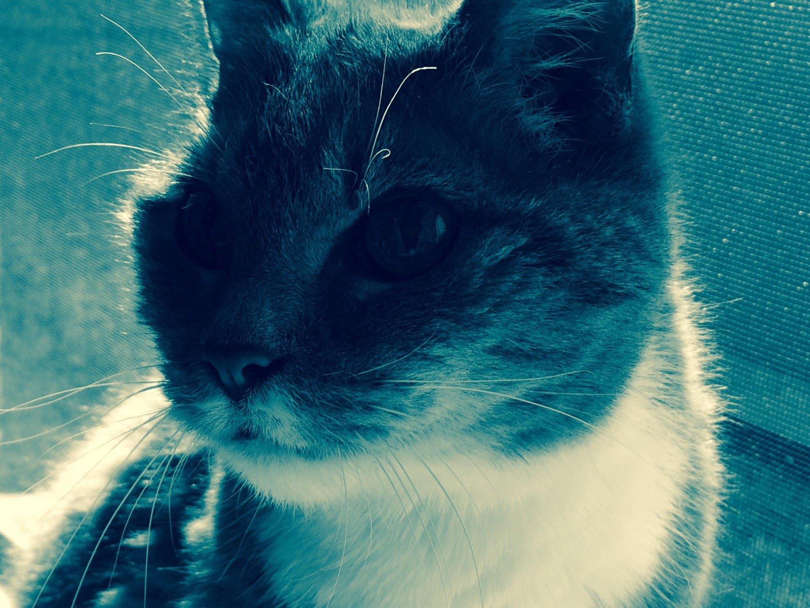 Bluewave Cat