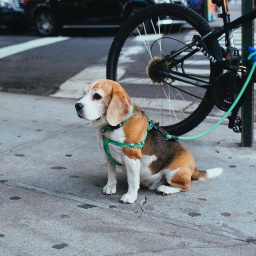 Urban Pet Owners 🐾