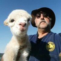 Carl Di Stefano (@GruntledChalkie) Twitter profile photo