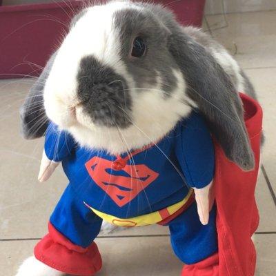Bini the Bunny on Twitter: