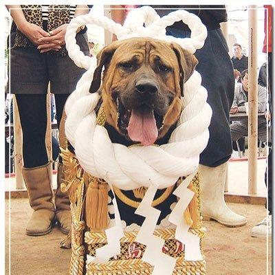 「土佐犬」の画像検索結果