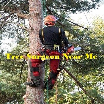 Tree Surgeon Near Me