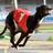 @GreyhoundBoard Profile picture