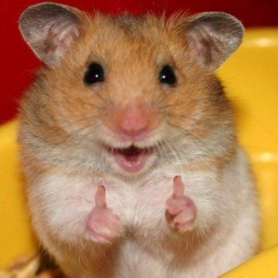 Lucky Hamster