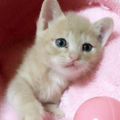 「ひのき猫」の画像検索結果