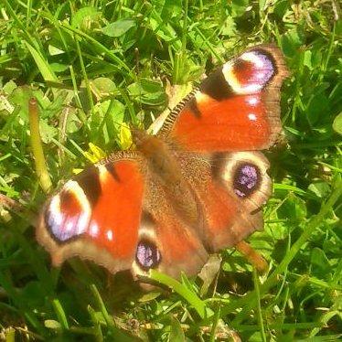 Theo.Waldspecht #GGUltras #Insektenwiese #BGE