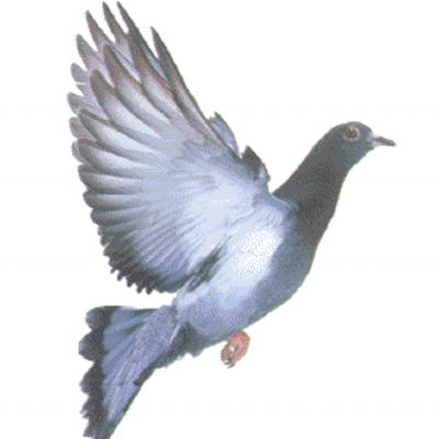 Анимация картинка голуби