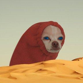 Dank Dune Memes