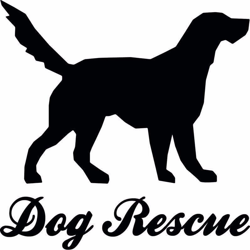 DogRescueCarcassonne