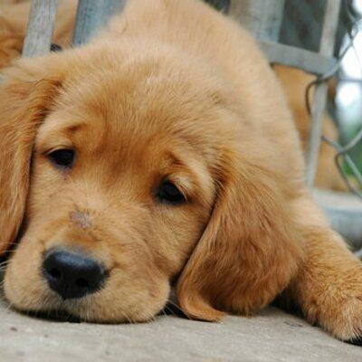 Puppy Dog Eyes Smiley