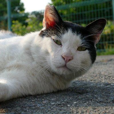 syuuji (たかが野良猫…されど癒しと感動の出会いが… ) @rhsmf682