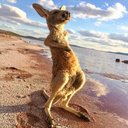 Photo of southaustralia's Twitter profile avatar