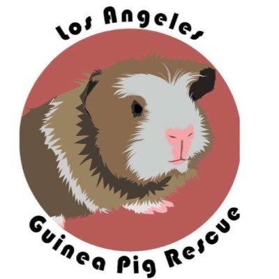 LA Guinea Pig Rescue