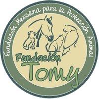 Fundacion Tomy