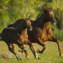 Los caballos de Uma (@1011Uma) Twitter