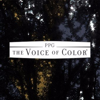 Ppg Voice Of Color At Voiceofcolor Twitter