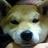 LEON3361 (@tsutako3361)