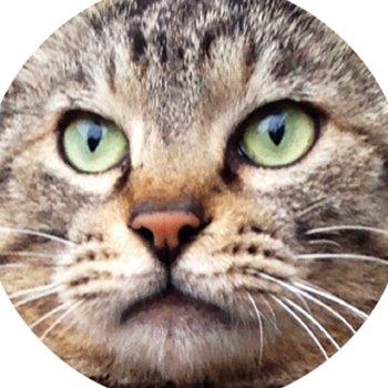 今日の猫。ー 外猫写真で呟きます ー @kyonoSatoru