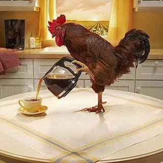 Image result for rooster coffee