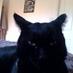 @neo_the_fat_cat