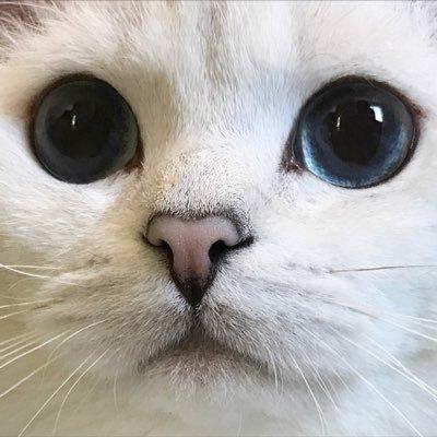 🐈 (@catsu) Twitter profile photo