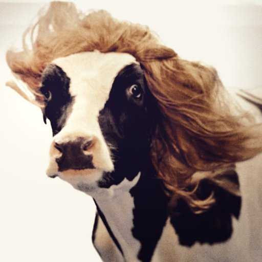 The Fabulous Cow