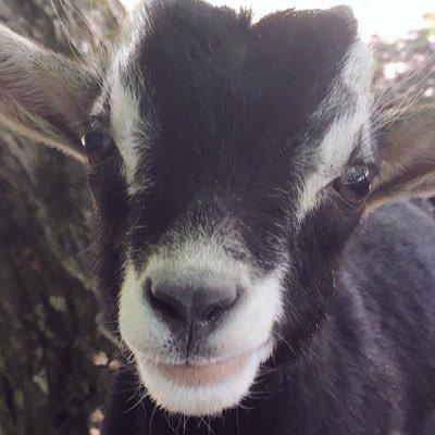 isak the goat
