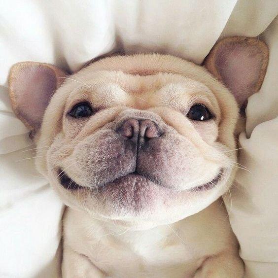 A Happy Dog Life   🐶