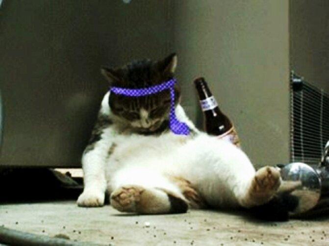 酔っぱらい猫のアイコン