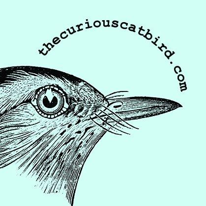 The Curious Catbird
