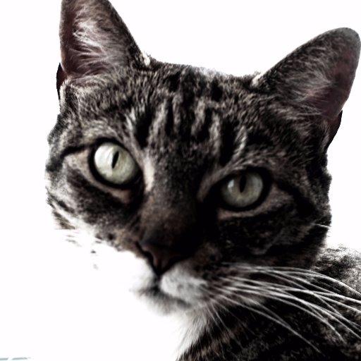 wise street cat