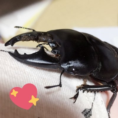 spike the beetle spikethebeetle twitter