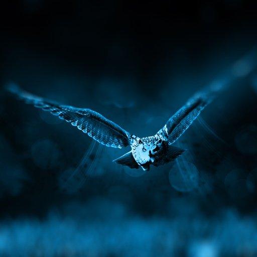 Shiny Wild Vibes