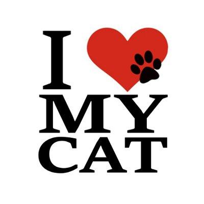 i love my cat llovmycat twitter