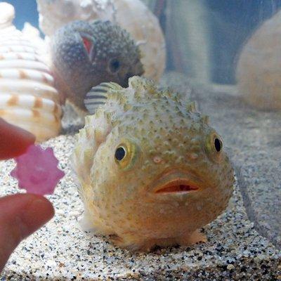 神秘的すぎる深海魚 (@shinpi_gy...