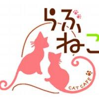 札幌 猫カフェ らぶねこ