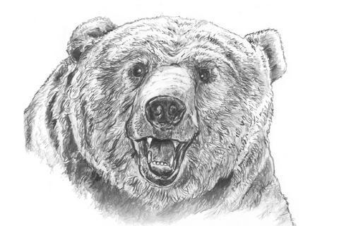 ursul brun (@clubursulbrun) | Twitter  ursul brun (@cl...
