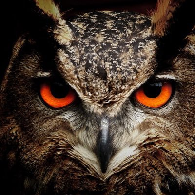 Give A Hoot