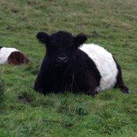 ryedale rare breeds (@debdavewardell) Twitter profile photo