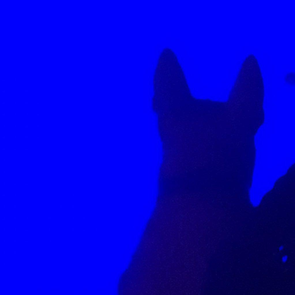laserdog27