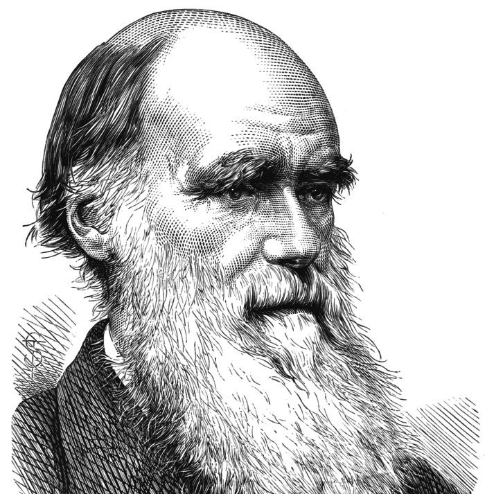 Crypto Darwin