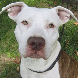 Pure Colby Pitbull (@Colby_Pitbull) | Twitter