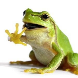 Delightful A Frog A Day