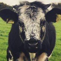 Kilcoolaght Farm (@KilcoolaghtFarm) Twitter profile photo