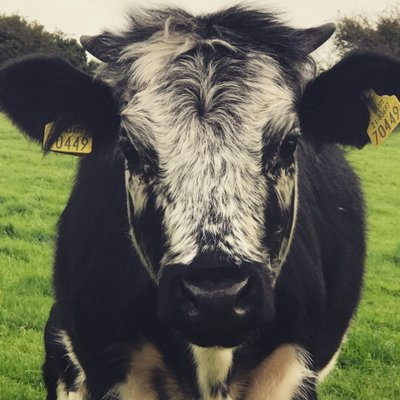Kilcoolaght Farm (@KilcoolaghtFarm) Twitter profile photo