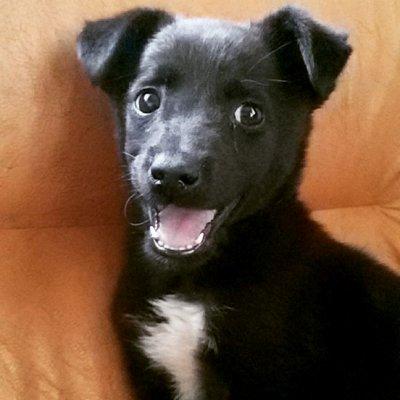 Hunde Tiere Codita On Twitter Daß Mir Der Hund Das Liebste